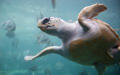 Ocean Conservation club creates plastic alternative
