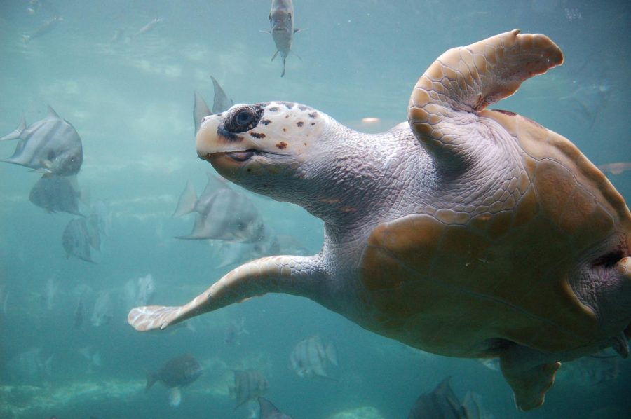 Off+shore+drilling+and+pollution+threaten+the+lives+of+sea+turtles.